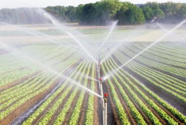 La confiance des agriculteurs rétablie : Bon déroulement de la campagne agricole à Casablanca-Settat