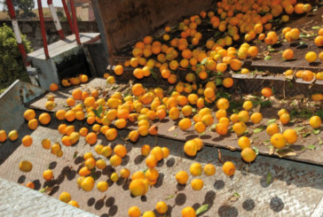 Visant à créer une offre agricole régionalisée : Le Plan agricole régional dope l'Oriental
