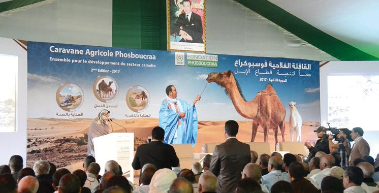 Le Groupe OCP et la Fondation Phosboucraa au chevet de la filière cameline