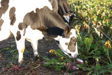 Cultures fourragères : Une composante importante de la production animale