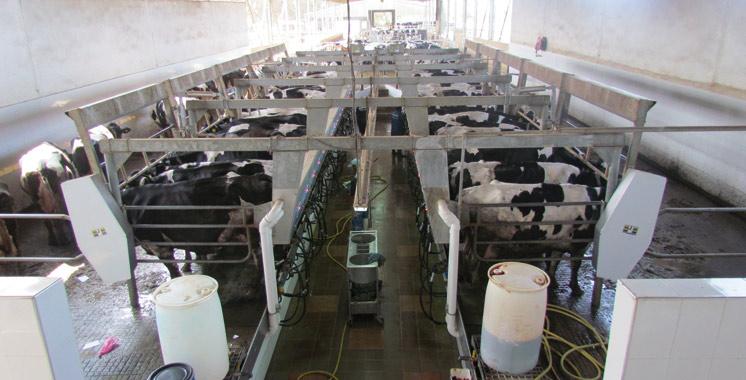 Rencontres : «Le lait, vecteur  de développement», les travaux démarrent à Rabat