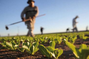 Approvisionnement en aliments de base :  1,62 million qx au profit de 192.500 agriculteurs