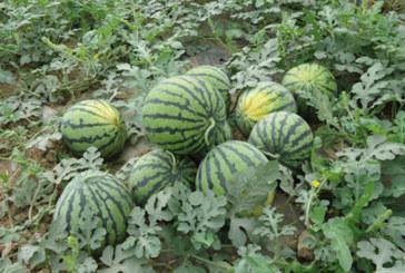 Affaire de parcelles de terres agricoles de Chichaoua: L'ONSSA met fin à la polémique