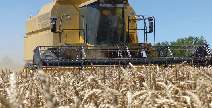 La carte mondiale du blé pour 2017-2018: Le Maroc 11ème plus gros importateur avec 4,9 millions de tonnes