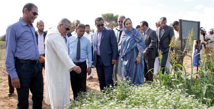 Un 1er laboratoire d'analyse du sol à Foum  El Oued