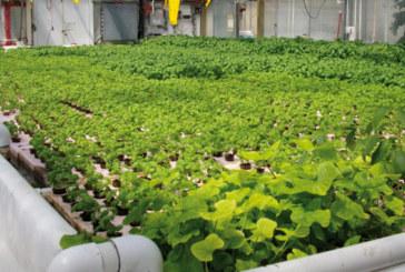 Production biologique : La filière en cours de structuration