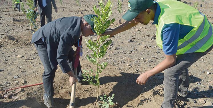 Eaux et forêts : Reboisement d'environ 730.000 hectares