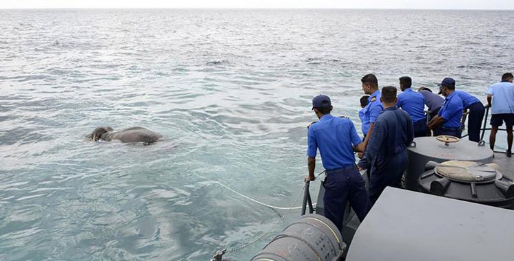 Sri Lanka : La marine sauve miraculeusement un éléphant en plein mer (vidéo)