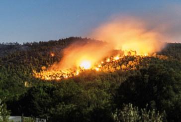 Incendies de forêts : 463 hectares ravagés  du 1er janvier au 31 août