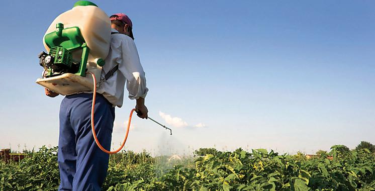 Pesticides : Le CAPM appelle à une révision de la réglementation