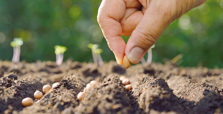 Meknès : Un symposium international sur l'agriculture de conservation