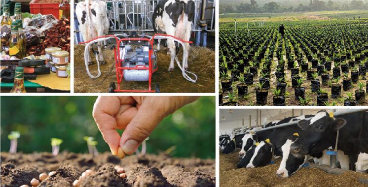 La province connaît une multitude de projets agricoles: Le ministère de l'agriculture accélère la cadence à Al Hoceima