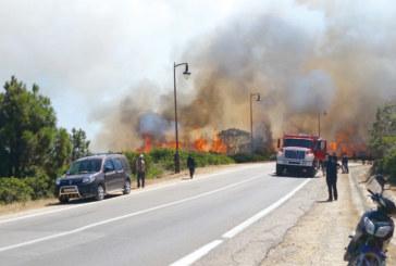 Tanger : Les incendies font rage dans la forêt de Mediouna