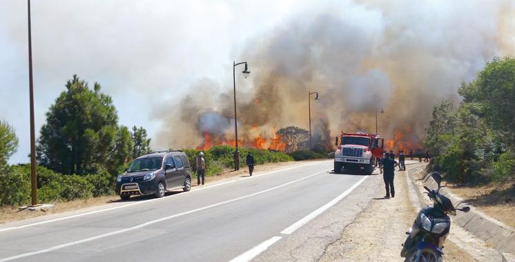 Incendie de forêts à Tanger : Un plan  de reconstruction sur 3 ans