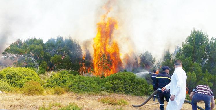 Tanger : L'incendie  de la forêt  de Mediouna enfin maîtrisé