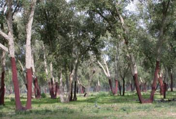 Coopératives forestières : 221 partenariats conclus avec les Eaux et forêts en 12 ans