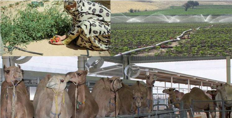 Agriculture : Un investissement de 2,6 milliards DH  à Laâyoune-Sakia El-Hamra