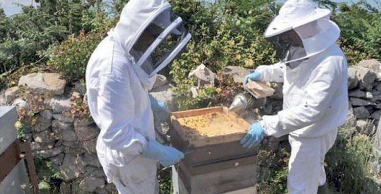 Programme IPAMed : Un projet de développement de la filière apicole en cours d'élaboration à Jbel Bou Naceur