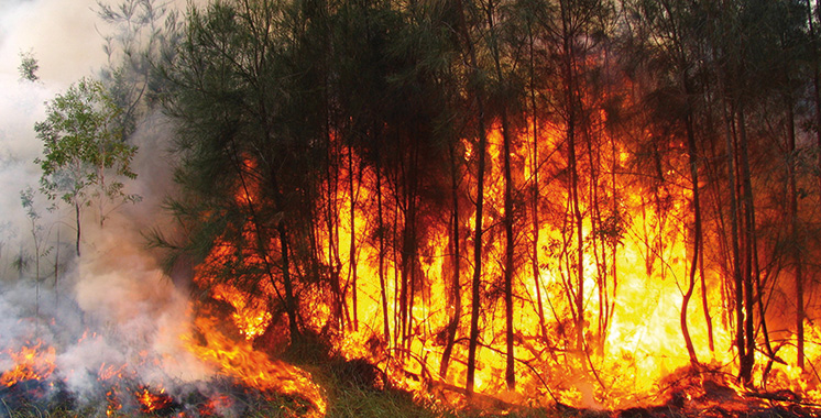 Incendies de forêts : 2.056 hectares ravagés  du 1er janvier au 30 septembre