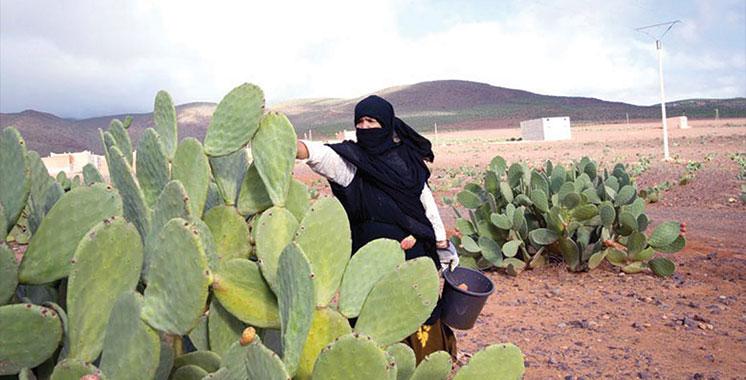 Sidi Ifni : 8ème Forum régional pour encourager l'agriculture durable dans les provinces du Sud
