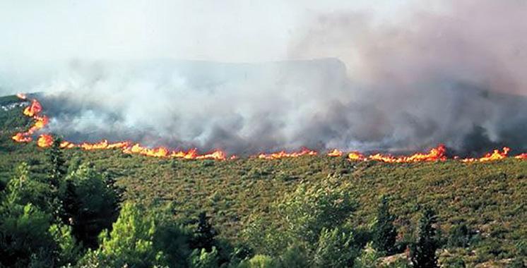 Al-Hoceima : Plus de 4 hectares de la forêt de Bouskkour ravagés par le feu