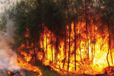 Incendies de forêts : 1.272 hectares partis  en fumée à fin juillet