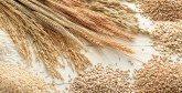 Céréales : Un rendement en constante amélioration