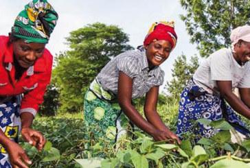 WIA : Pour une meilleure gouvernance avec les femmes africaines