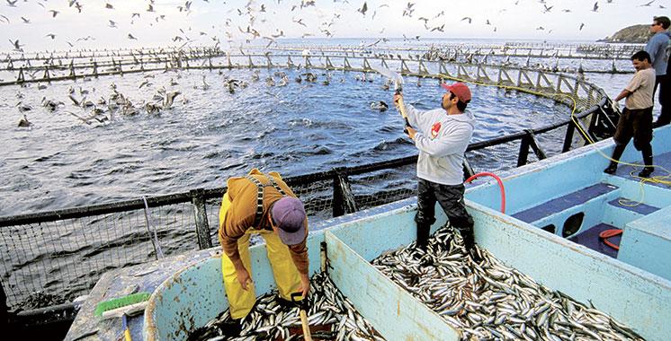Aquaculture : Pleins feux sur les opportunités d'investissement