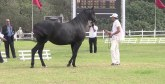 La Sorec annonce l'édition 2019 des concours interrégionaux d'élevage des chevaux Arabe-Barbe