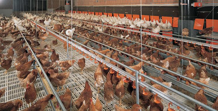 FISA : Pas d'alimentation cancérigène dans les fermes avicoles