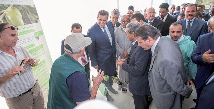 Akhannouch : L'exportation des olives réalise actuellement près de 1,5 milliard DH