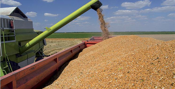 Campagne céréalière : Les mesures du ministère de l'agriculture