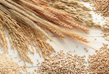 Céréaliculture, une filière résiliente