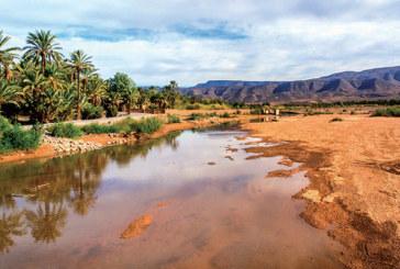 Palmeraie : Raviver l'écosystème