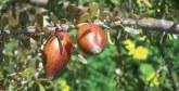 Le système agro-forestier-pastoral d'Ait Souab-Ait Mansour consacré par la FAO