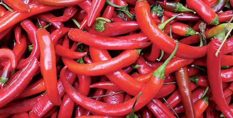 Béni Mellal-Khénifra : 28.000 tonnes de piment rouge produites en une année