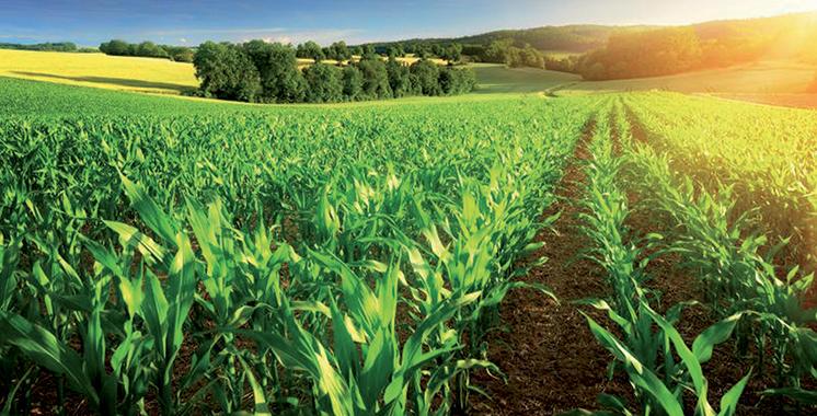 Culture céréalière, fruits et légumes : Une récolte qui promet