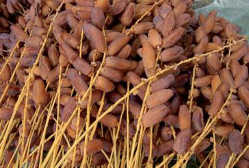 Province de Guelmim : La Foire régionale des dattes de Taghjijt du 17 au 20 octobre