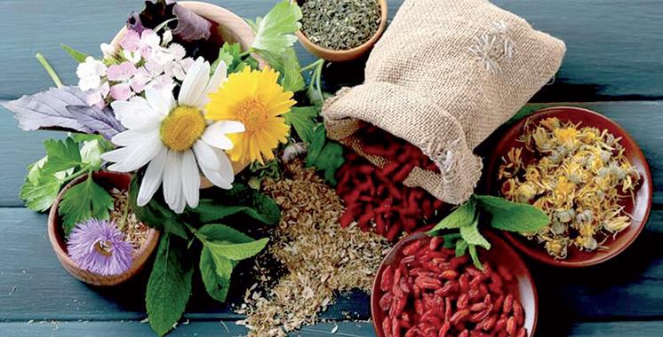 Taroudant : 1er Festival des plantes médicinales et aromatiques