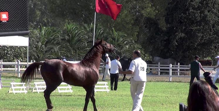 Meeting international du Maroc des courses: Carrefour de rencontre des meilleurs chevaux