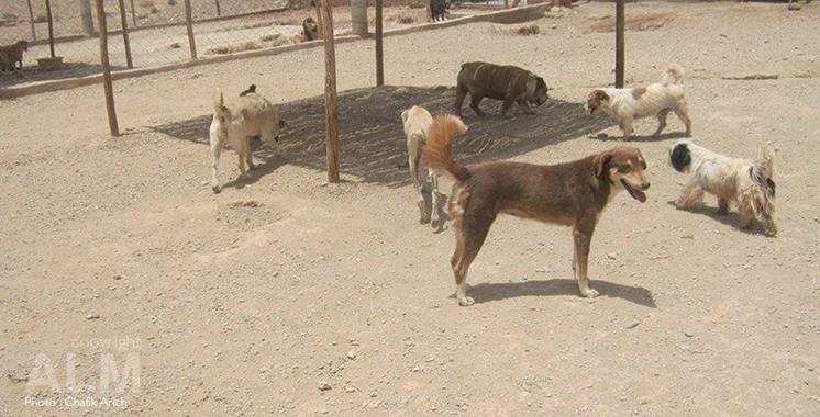 Lutte contre la rage : Le projet pilote sur la capture des chiens errants en cours d'application