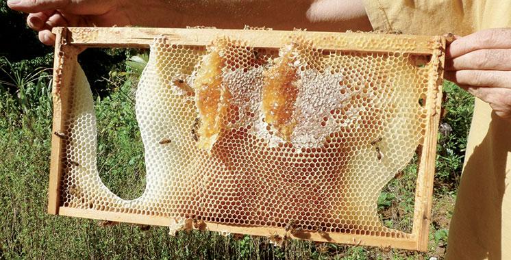 De nouvelles mesures pour la commercialisation du miel et produits de la ruche