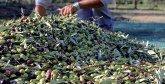 Oléiculture : Les nouveaux engagements  des professionnels