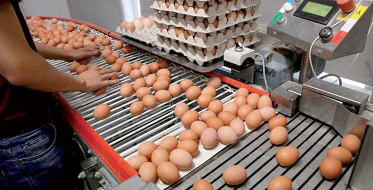 Secteur avicole: 180 œufs consommés par habitant en 2017