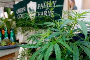 La Californie devient le plus grand marché américain du cannabis
