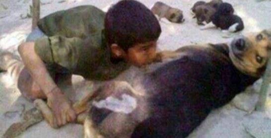 Le ministère de l'Intérieur dément les allégations relatives à la photo d'un individu tentant de téter une chienne