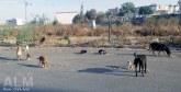 Casablanca : 20 millions DH contre les rats,  les cafards et les chiens errants
