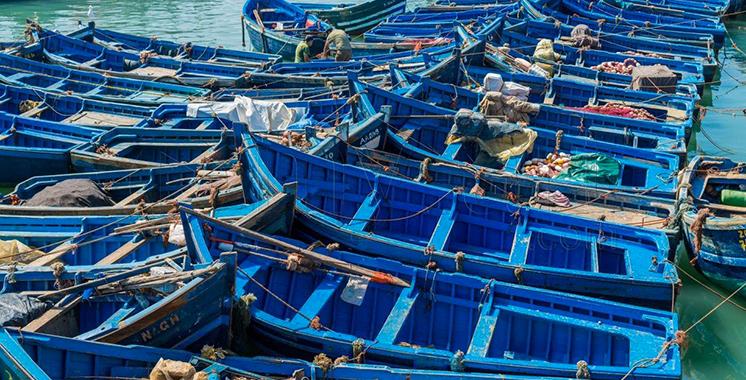 Pêche côtière et artisanale: Près de 6,5 milliards de dirhams générés à fin octobre