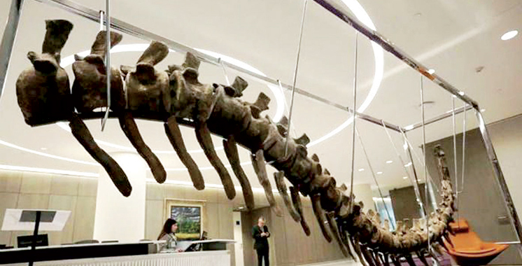 Affaire de la mise en vente aux enchères du spécimen : Aucun avis favorable n'a été délivré pour l'exportation de la queue du dinosaure